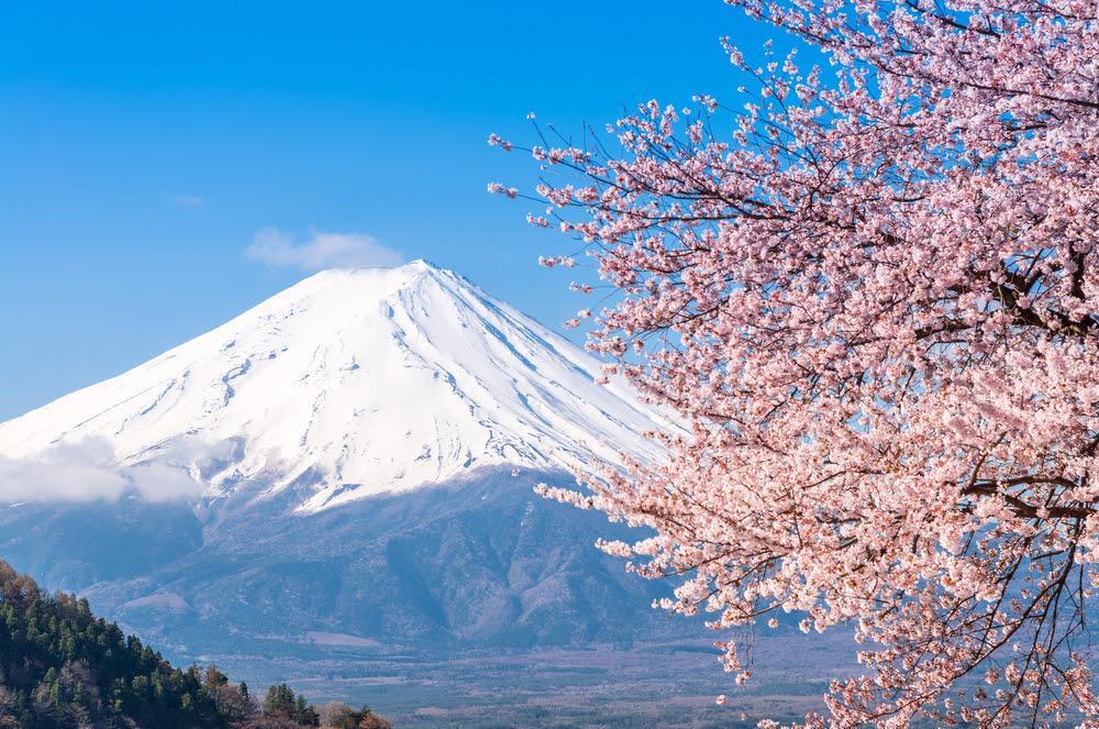 Сакура — символ Японии
